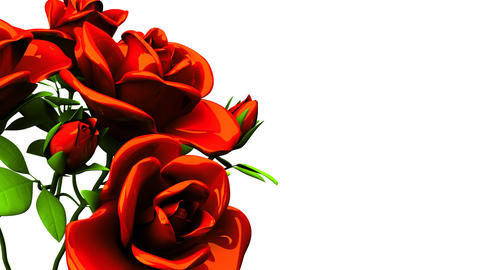 Red roses bouquet on white text space 動画素材, ムービー映像素材