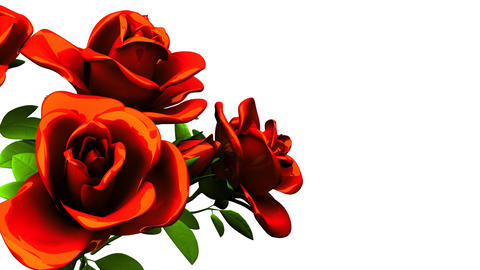 Red roses bouquet on white text space CG動画