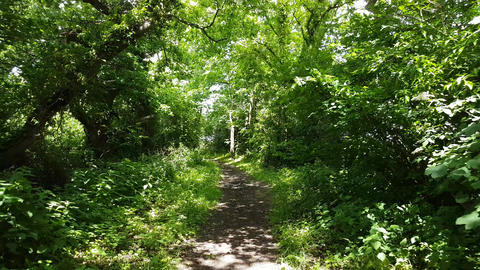 Walking Down a Woodland Path on a Sunny Day in Flintshire 2 Live Action