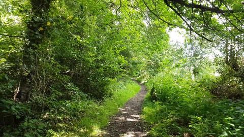 Walking Down a Woodland Path with Overhanging Trees on a Sunny Day Live Action