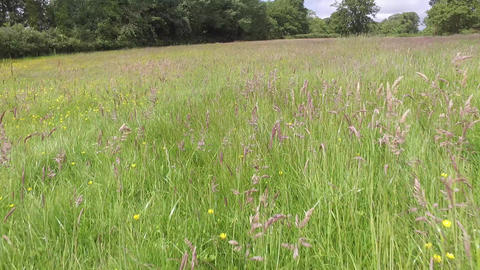 Flying Low Over Welsh Field with Long Grass in Summer Live Action