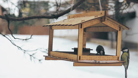 Birds flew to the feeder for sunflower seeds Footage
