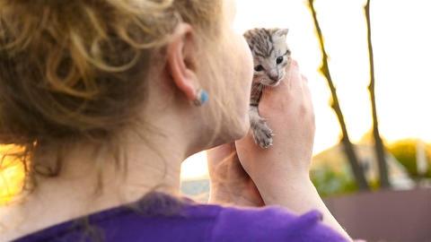 A beautiful girl is holding a small kitten. Newborn kitten. Slow motion Footage
