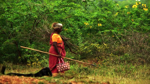 Village Women Carrying Firewood On Their Head, Indian women carrying firewood Live Action