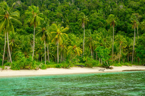 Wild Beach, Jungle and Palm Trees Photo