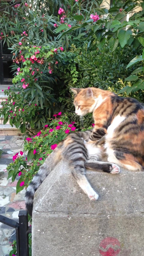 Masseur cat Footage