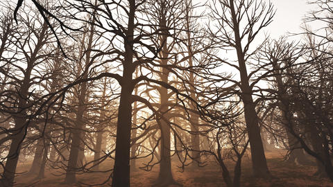 4K Dead Forest Misty Woods Cinematic 3D Animation 1 Animation