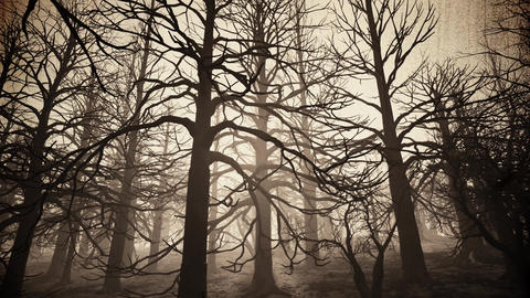 4K Dead Forest Misty Woods Cinematic 3D Animation 4 vintage Animation