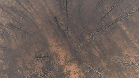 4K Dead Forest Misty Woods Cinematic Aerial 3D Animation 4 Animation