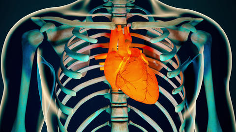 4K Human Body Transparent Heart Modern Anatomical 3D Animation 3 Animation