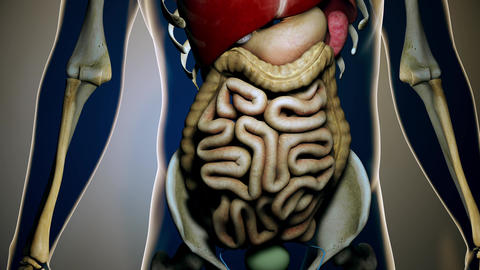 4K Internal Organs Get Sick in a Transparent Human Body Anatomical 3D Animati Animation