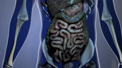 4K Sick Internal Organs in a Transparent Human Body Anatomical 3D Animation 5 Animation