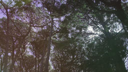 Aerial Flying Between Trees in Forest on Sunny Day Stock Video Footage