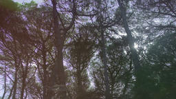 Aerial Flying Between Trees in Forest on Sunny Day Footage