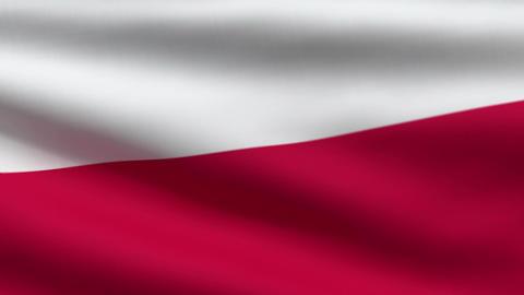 Polish flag Stock Video Footage