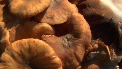 mushroom pan 02 Footage