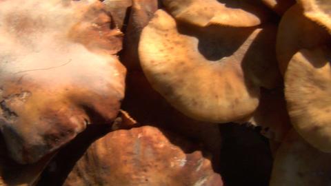 mushroom pan 02 Stock Video Footage