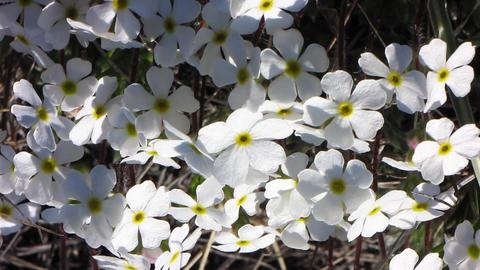 Flowers Stock Video Footage