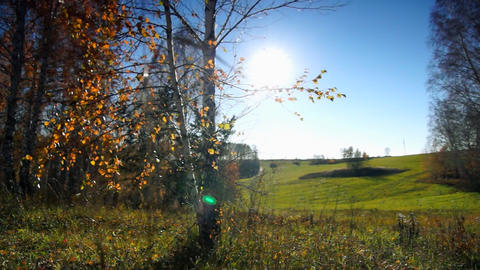 Autumn dolly Stock Video Footage