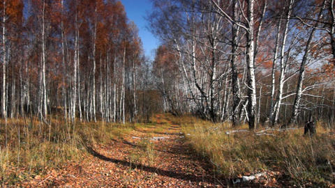 Autumn in motion Stock Video Footage