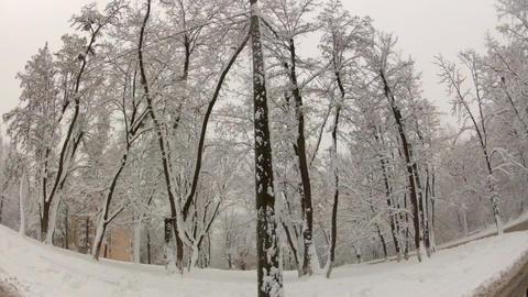winter road Footage