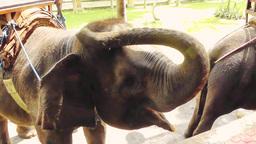 Elephant.Bali Archivo