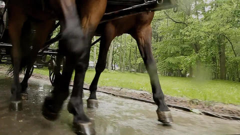 Close-up of legs of horses running on the road Archivo
