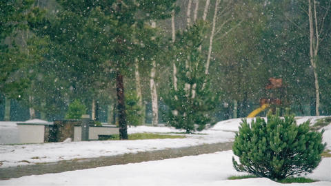 In winter the large flakes falling snow Footage