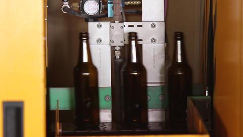 Beer brown bottles move along the conveyor belt Live Action