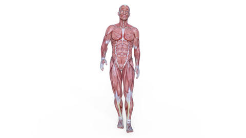 Muscle Male Walk Animation