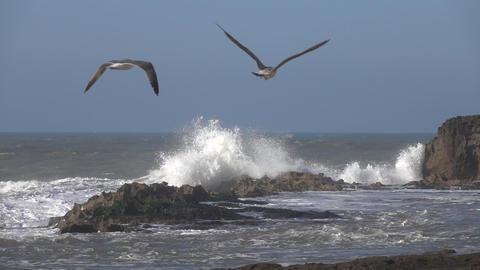 Splashes big waves and flying seagulls, slomo Footage