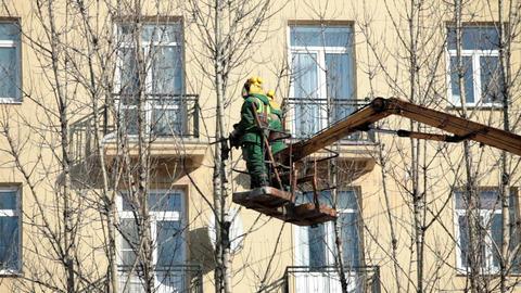 Gardeners cut trees Footage