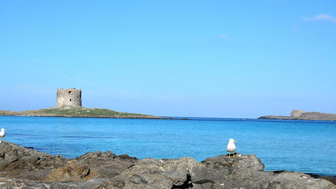 Aragonese tower in world famous La Pelosa beach, Stintino Footage