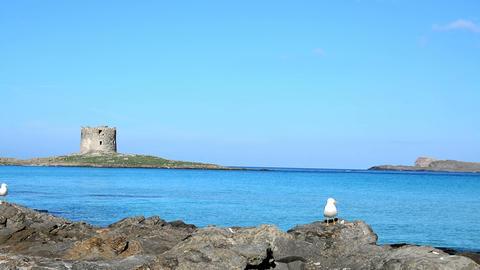 Aragonese tower in world famous La Pelosa beach, Stintino Live Action