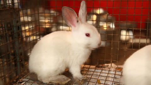 Bunny rabbit eating in cage Live Action