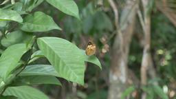 Butterfly on leafs ビデオ