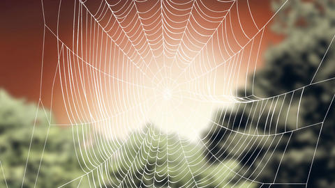 Spiderweb Animation