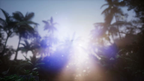 4k Vibrant colors palm trees summertime beach sunset Footage
