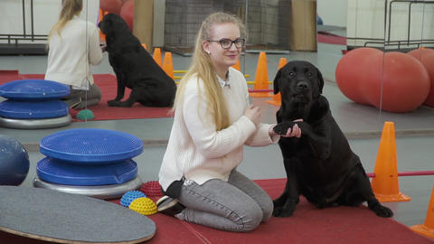 Young girl training black labrador to give her a paw Footage