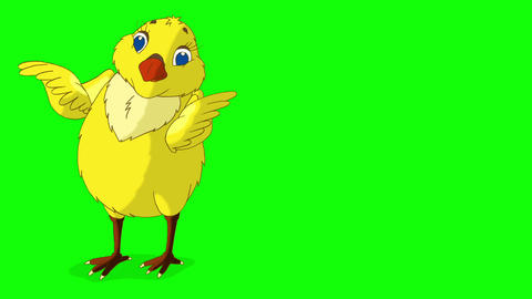 Yellow Chicken Looking for Food Chroma Key Animation