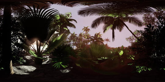 vr 360 camera moving shot of a lush tropical jungle in a sun with coconuts, palm VR 360° 動画