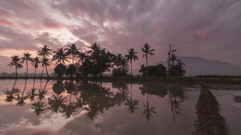 Timelapse reflection one row of coconut trees Live Action