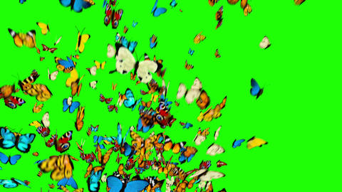 Butterflies Flying on a Green Background Animation
