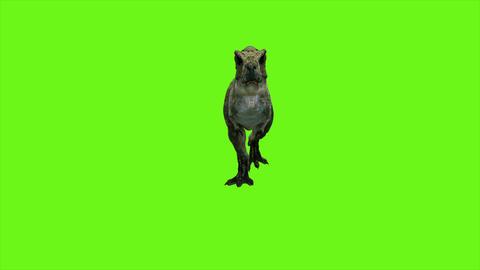 T Rex Tyrannosaur Dinosaur animation on green screen. GI realistic render. 4k Animation