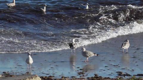 Seagulls Live Action