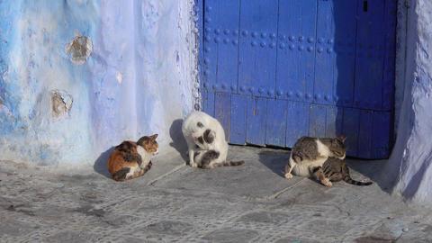 Cats on blue street inside Medina of Chefchaouen Live Action