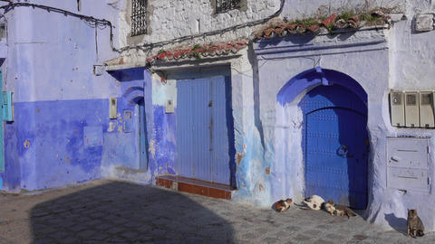 Cats on blue street inside Medina of Chefchaouen, Live Action