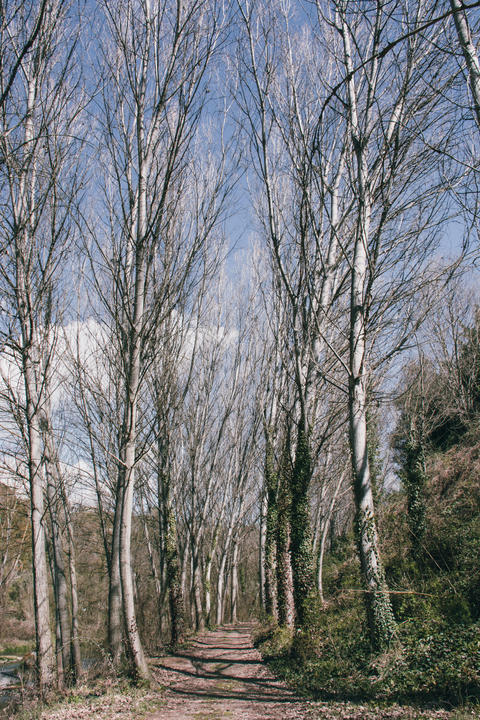 Tall Trees and Nature Road Photo