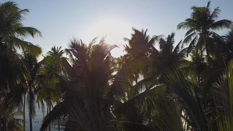 sunset through the palm trees on the island of bora bora, aerial view Archivo
