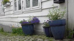 Norway Bergen Skuteviken white houses with plant pots at the way edge Footage